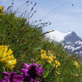 Graustock - ©Engelberg-Titlis Tourismus