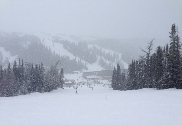 fresh powder