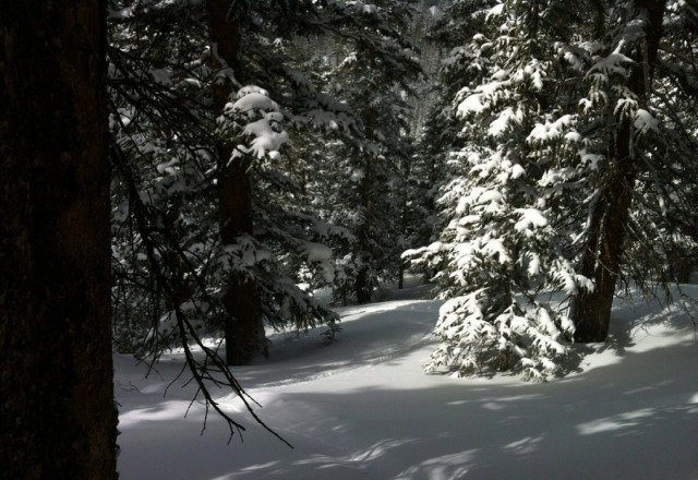 amazing day. tons of powder in zuma on torries and greys. untracked.
