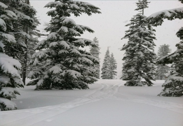 Lots of new snow in the last couple of days! True report on the 17