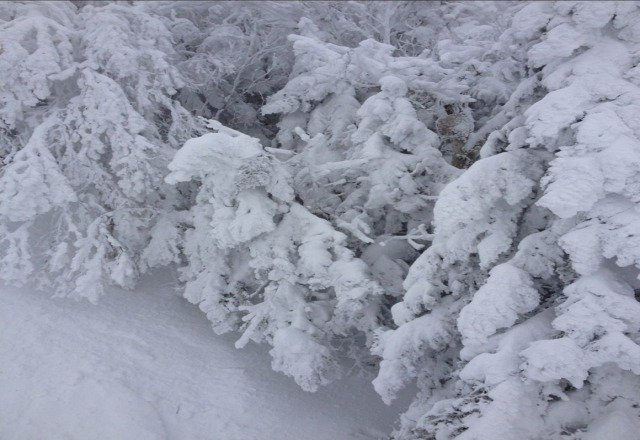 lots of snow over the mountain today... good powder in some parts, icy in others. looking forward to going back tommorrow.