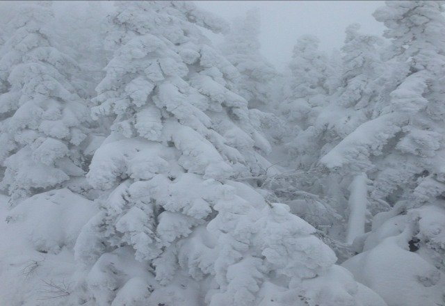 some of the best skiing i have done in the east. lots of powder in the woods and no nice. tons of snow at the summit.