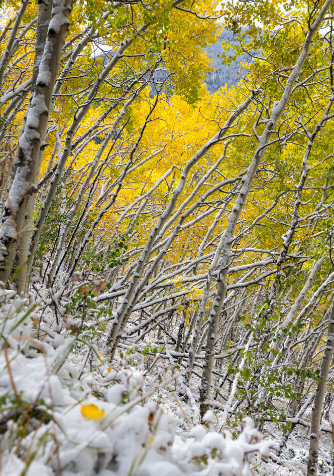 Snowy fall in Breck