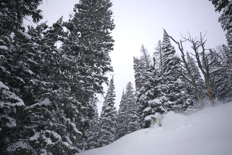 A skier finds powder among the trees in the backcountry of Jackson Hole, Wyoming