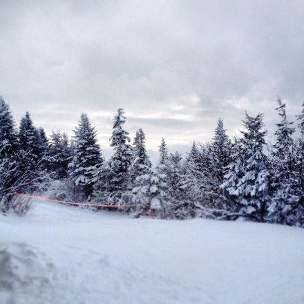 Great snow ......wonderful night skiing!