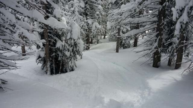 powder for days... yesterday was awsome!!!