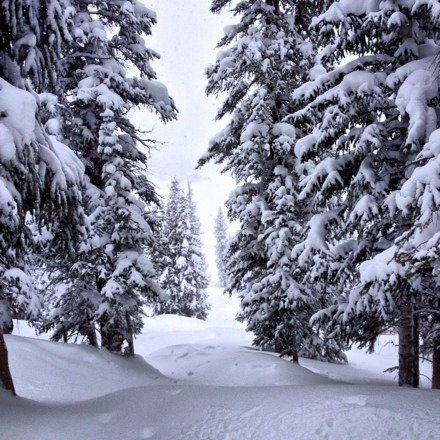 fresh pow pow everywhere brah brah's. went on Saturday 2/8 and everywhere was beautiful. Untracked powder on the front side and backside of the mountain, montezuma bowl was best it's been in a long time. now is the time to get up there. Not nearly as busy as the resorts.