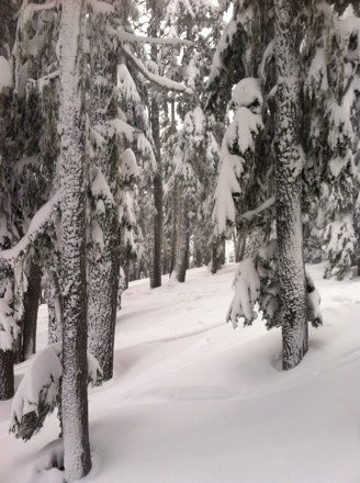 2/19/14 Powder....in the trees....was DEEP.