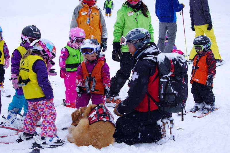 Rio is the Avalanche Dog at Arapahoe Basin.
