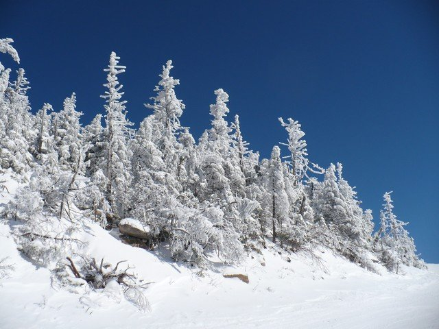 Snowy trees at Whiteface, NY