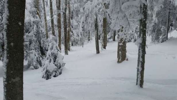 amazing conditions packed power. power in the glades!! lines were long for the new bubble chair but well worth the trip.