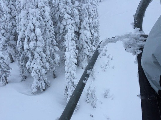 Powder today !! Snowed all day   lovely