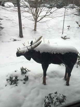 The moose says the snow is good!!