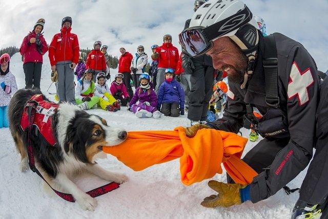 Tug o' war, Aspen Snowmass style. - ©Aspen Snowmass