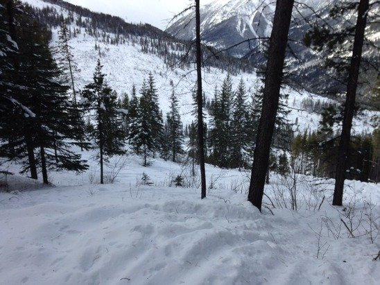Great day with little sticking out great tree skiing with untracked snow