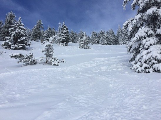 As good as it gets in AZ! Trees are good but will be skied out in a few days.