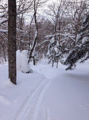 So day 2 of pow at okemo. No silent in the trees here they were hella loud! Be back tomorrow!! :))