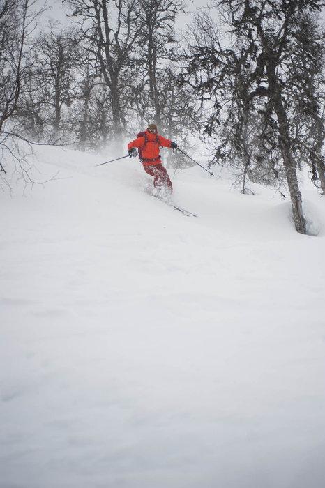 Snøen var ekstremt fin i skogen denne dagen. Vi holdt oss til innunder tregrensen på grunn av usikker snø lenger oppe. - ©Eirik Aspaas