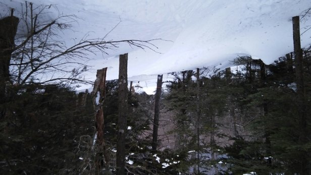 Bolton Valley - still some great tree riding considering the crazy weather... - ©jrhurteau