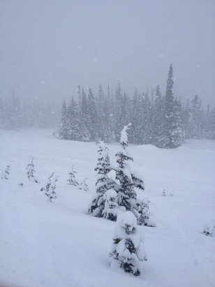 Whistler/Blackcomb - Alpine was sick today should be good tomorrow