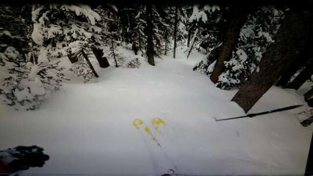 Breckenridge - Following fox tracks through untouched white gold...Epic run after epic run.  Thank you snow gods!