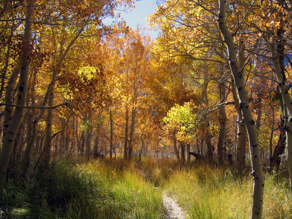 A hiking path in fall at Mammoth.