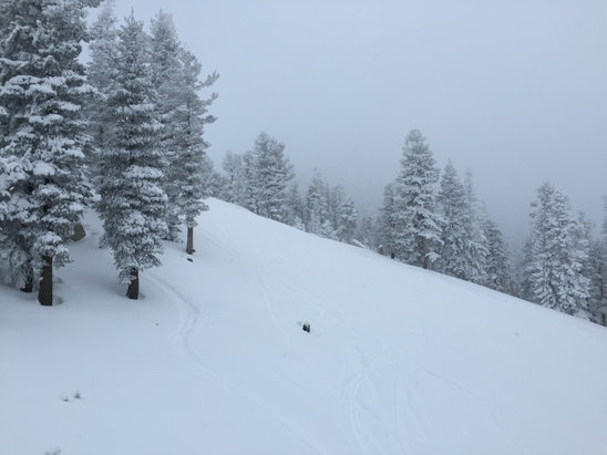 Heavenly Mountain Resort - Powder and packed powder. Beautiful out here today! - ©william's iPhone