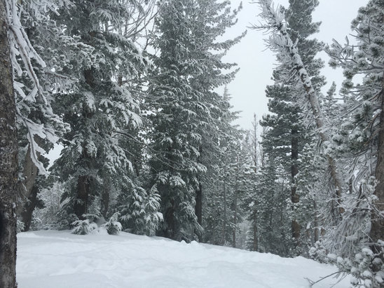 Mt. Rose - Ski Tahoe - Absolutely beautiful today! Worth it  - ©NevadaWolf