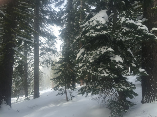 Northstar California - Great day on the mountain. Snow in the trees all day - ©Opus