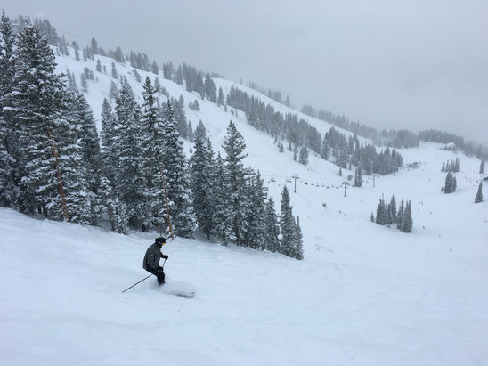 Solitude Mountain Resort - Epic day. Tomorrow will be more amazing. Lots of new snow. Powder conditions. Snowing. Not cold. Very little wind.  No crowds. GO!  - ©Neuron