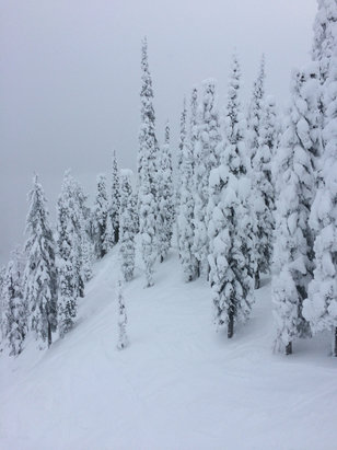 Fernie Alpine - This was from Monday, December 28. Amazing conditions. So much pow.  - ©Greg Andrews's iPhone