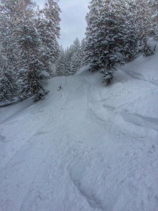 Alta Ski Area - Great conditions, blew hard all last night but variable snow type.    - ©dawson