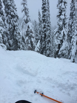 Revelstoke Mountain Resort - Great snow in north bowl. Stay to the upper mountain for powder. Un touched can be found if you wanna work for it.  Lower quarter was crusty and hard pack  - ©Roy's iPhone