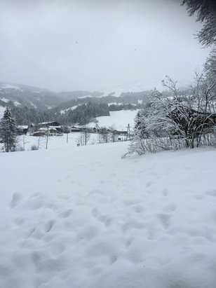 Kitzbühel - Big snowfall over last 24hrs and still snowing! It's a powder morning !  - ©Sean