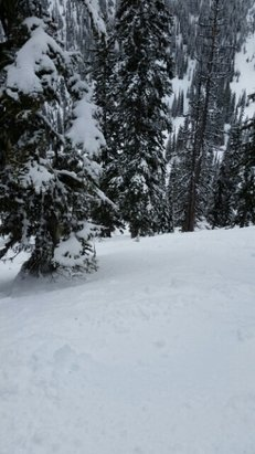 Fernie Alpine - pow......chow....good up top ... mid mountain sketchy ...bottom soft..☺  - ©snowhound99