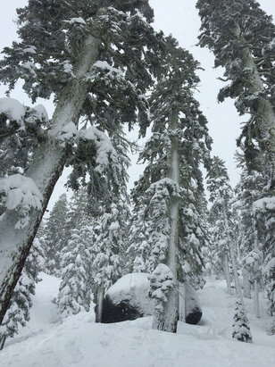 Sierra-at-Tahoe - Quale Creek lookin gnarly with 20in of Pow!! - ©iPhone