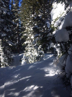 Vail - Still lots of snow in the woods , a great day for sure  - ©jolly jon