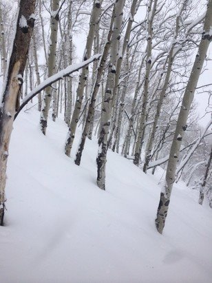 Beaver Creek - Thresher glades were sick  - ©jolly jon