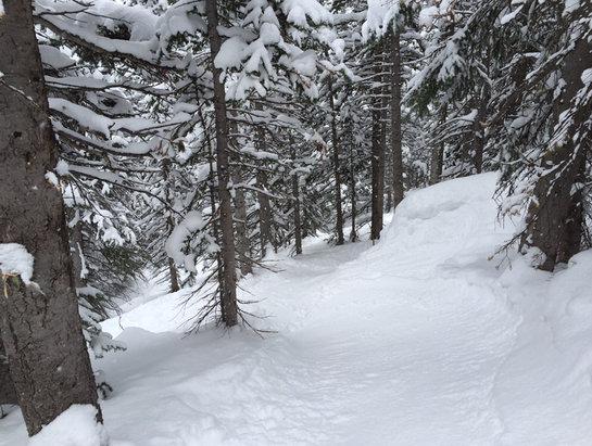 Liberty - Steep and deep in the trees for my last run of the season, see ya next year Liberty! - ©iFurey