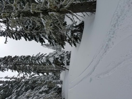 White Pass - Good powder day yesterday, get it while we still can.  - ©Stewart