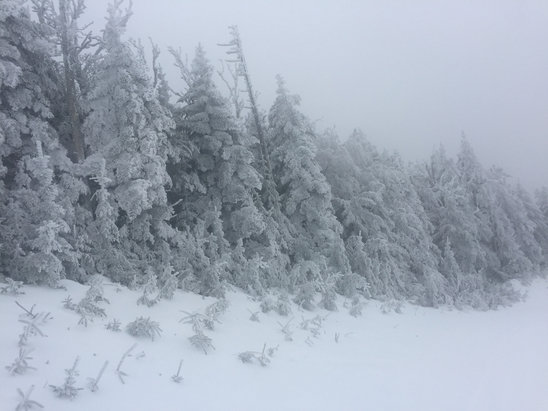 Okemo Mountain Resort - Had a wonderful day 1/25/17.  No lift lines, great snow, good deals on Liftopia, and energetic, kind staff. - ©Christina's iPhone