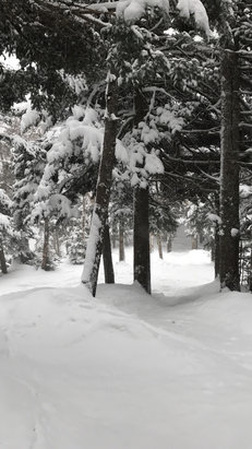Stratton Mountain - Trees are there for the taking if you know where to look!  - ©MervinMob