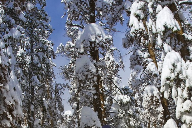 Winter Park skier