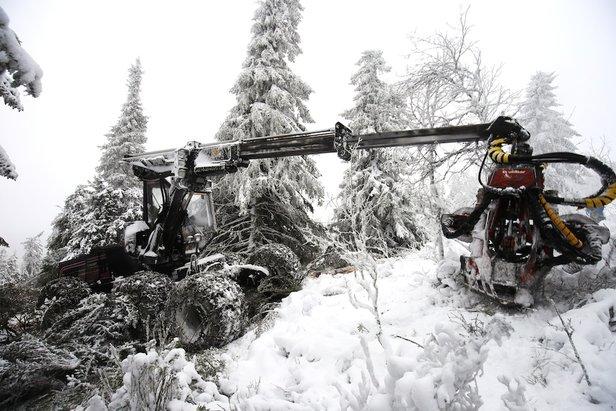Hogstmaskinen i gang på Vestsiden i Kvitfjell. - ©Christian Bråtebekken / Kvitfjell