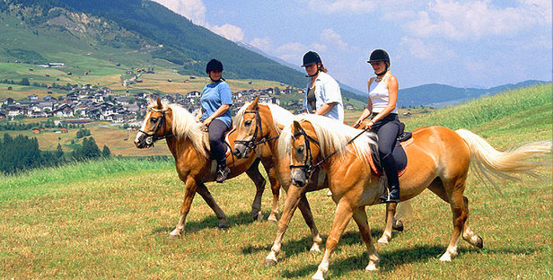 Serfaus_Pferde
