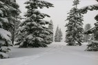 by anonymous user - Lots of new snow