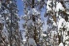 Extra Days Added On For Copper/Winter Park Pass