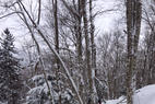Stowe Mountain Resort - Best conditions I've ever seen here. Straight pow everywhere. Glades were top notch.  - Stowe Mountain Resort -