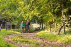 Wandern am Chiemsee