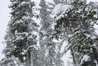 Lookout Pass Ski Area - Yesterday was a blast! We arrived and at least 10 inches had fallen. It snowed all day an was still snowing left. The coverage is fantastic this year! Highly recommend hitting the slopes peeps!  - Lookout Pass Ski Area